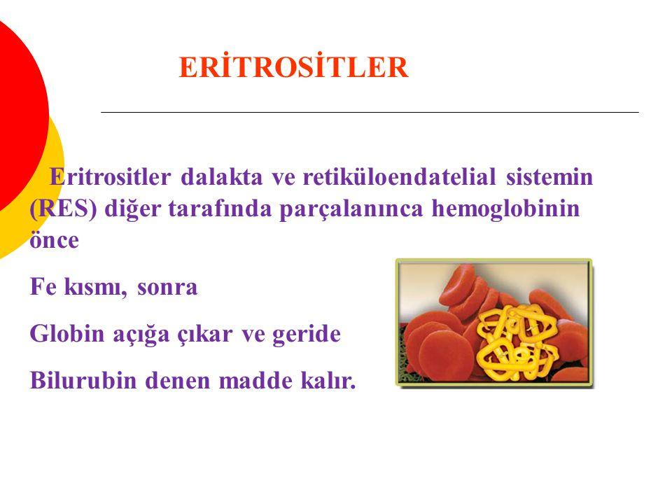 Eritrositler dalakta ve retiküloendatelial sistemin (RES) diğer tarafında parçalanınca hemoglobinin önce Fe kısmı, sonra Globin açığa çıkar ve geride