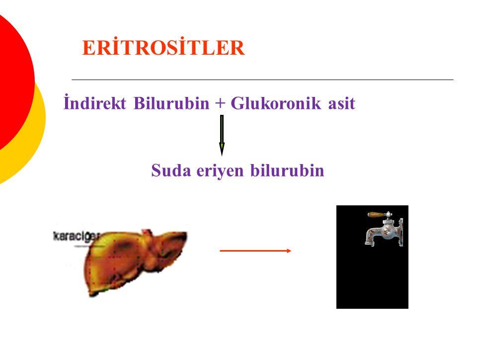 İndirekt Bilurubin + Glukoronik asit Suda eriyen bilurubin ERİTROSİTLER