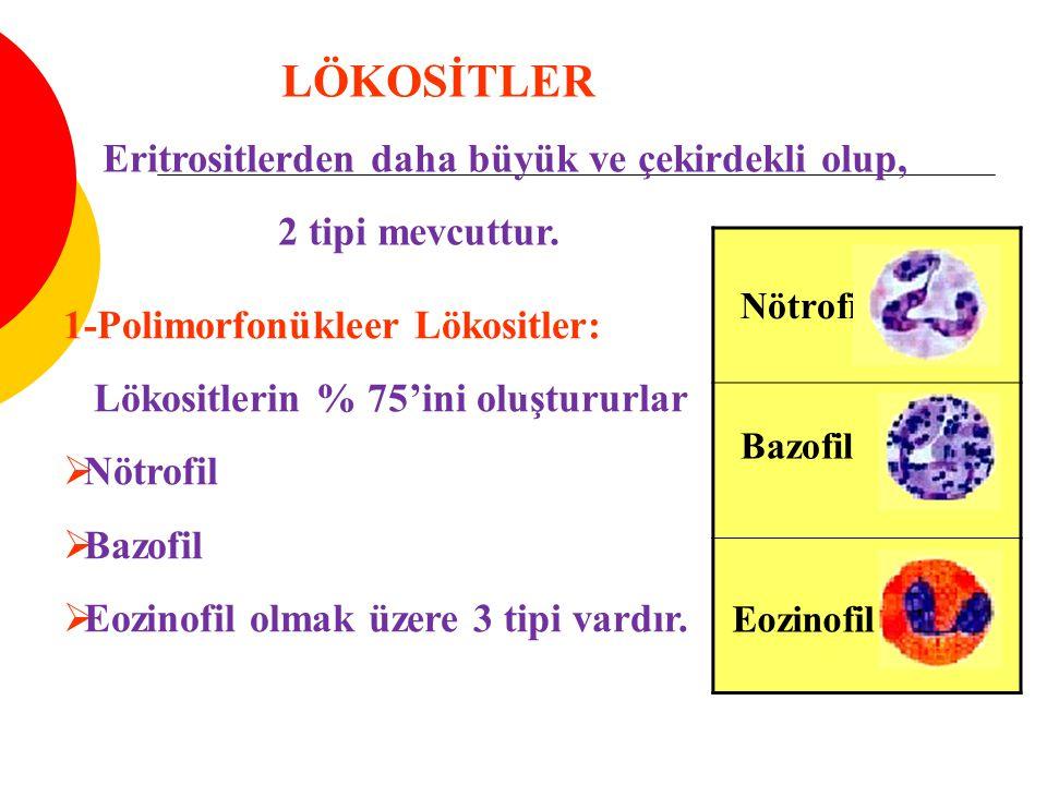 LÖKOSİTLER Eritrositlerden daha büyük ve çekirdekli olup, 2 tipi mevcuttur.