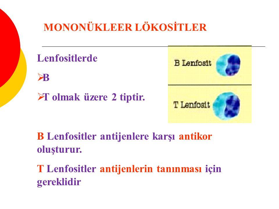 Lenfositlerde  B  T olmak üzere 2 tiptir. B Lenfositler antijenlere karşı antikor oluşturur. T Lenfositler antijenlerin tanınması için gereklidir MO