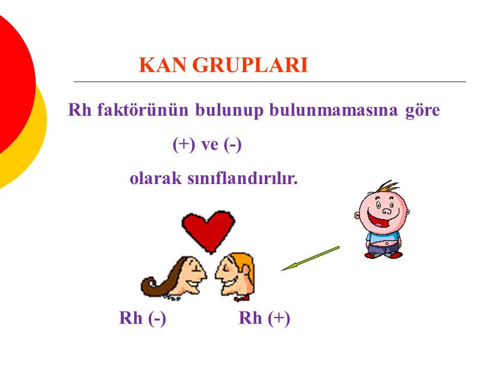 KAN GRUPLARI Rh faktörünün bulunup bulunmamasına göre (+) ve (-) olarak sınıflandırılır. Rh (+)Rh (-)
