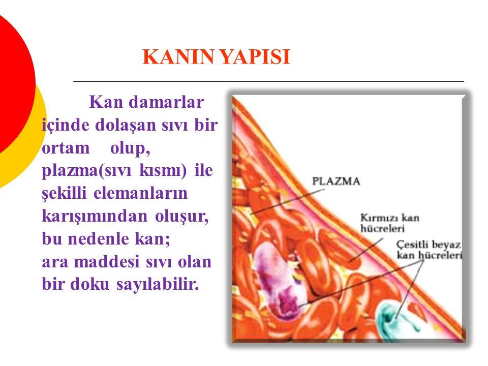 KANIN BİLEŞİMİ PLAZMA Total kanın %55'ini oluşturur Plazma içinde % 92 oranında su,% 7 oranında kolloid osmotik basıncın oluşmasında gerekli olan serum albuminleri (albumin,globulin ve fibrinojen), %1 den az bir kısmında antikorlar,besi maddeleri, metabolik atıklar, solunum gazları, enzimler ve inorganik tuzlar bulunur.