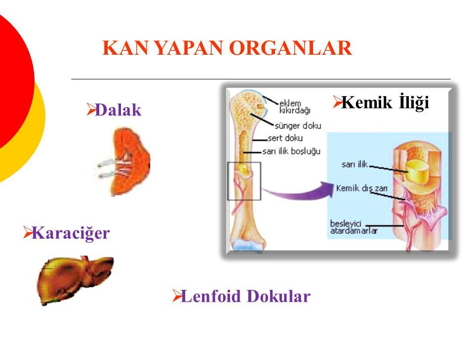 KAN YAPAN ORGANLAR  Kemik İliği  Dalak  Karaciğer  Lenfoid Dokular