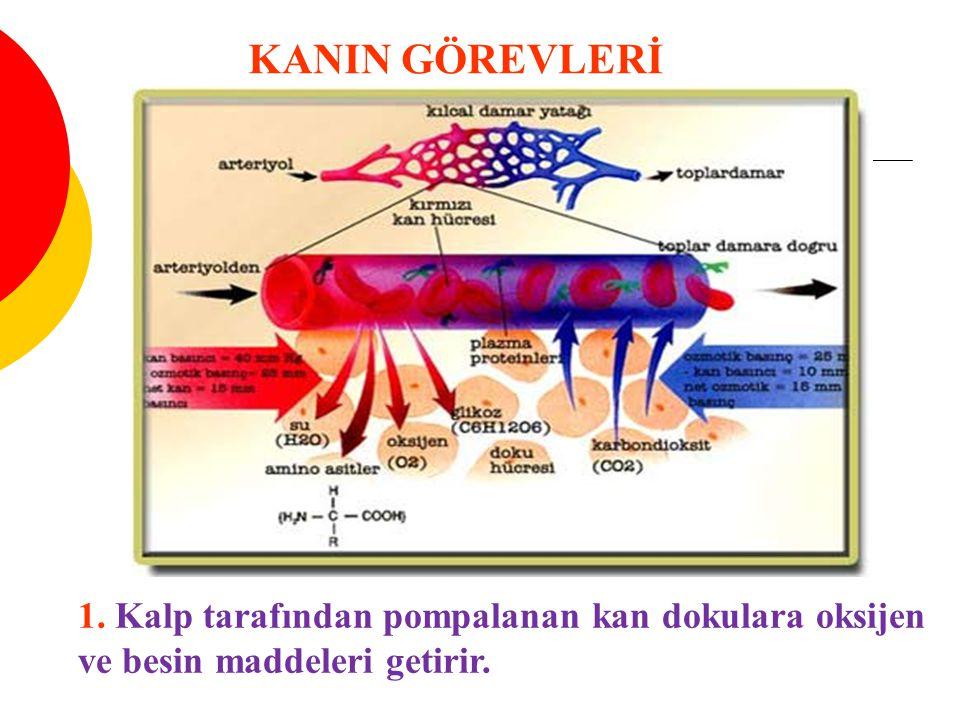 Şekilli elemanlar (%45 )  -Eritrositler (5-5,5 milyon/mm3) Hemoglobin (%35 ) #hem #globin  -Lökositler (5-10 bin / mLm3) Granülasit #Nötrofil #Eozinofil #bazofil Agranülasit #lenfosit #monosit  Trombositler (250-500 bin / mm3) KAN