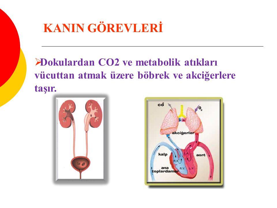  Dokulardan CO2 ve metabolik atıkları vücuttan atmak üzere böbrek ve akciğerlere taşır. KANIN GÖREVLERİ