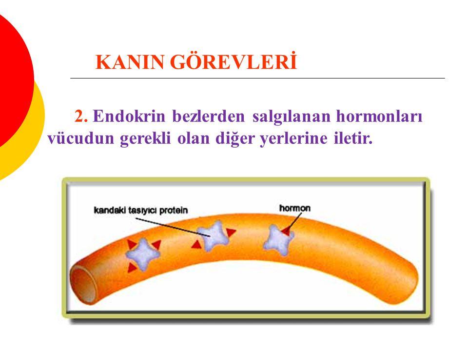 2. Endokrin bezlerden salgılanan hormonları vücudun gerekli olan diğer yerlerine iletir. KANIN GÖREVLERİ