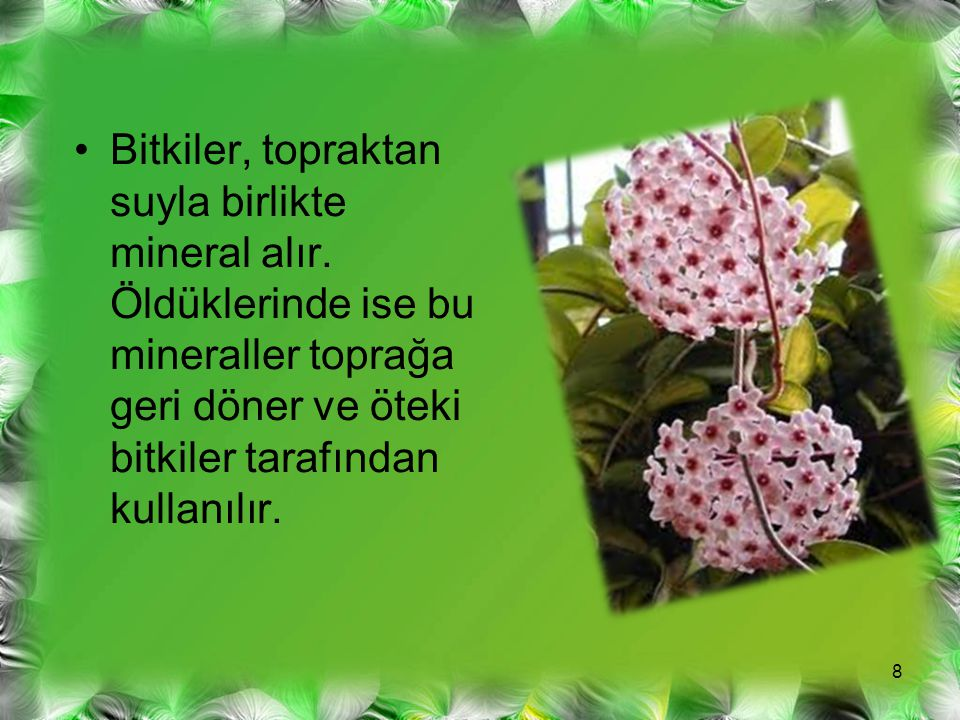 Bitkiler, topraktan suyla birlikte mineral alır. Öldüklerinde ise bu mineraller toprağa geri döner ve öteki bitkiler tarafından kullanılır. 8