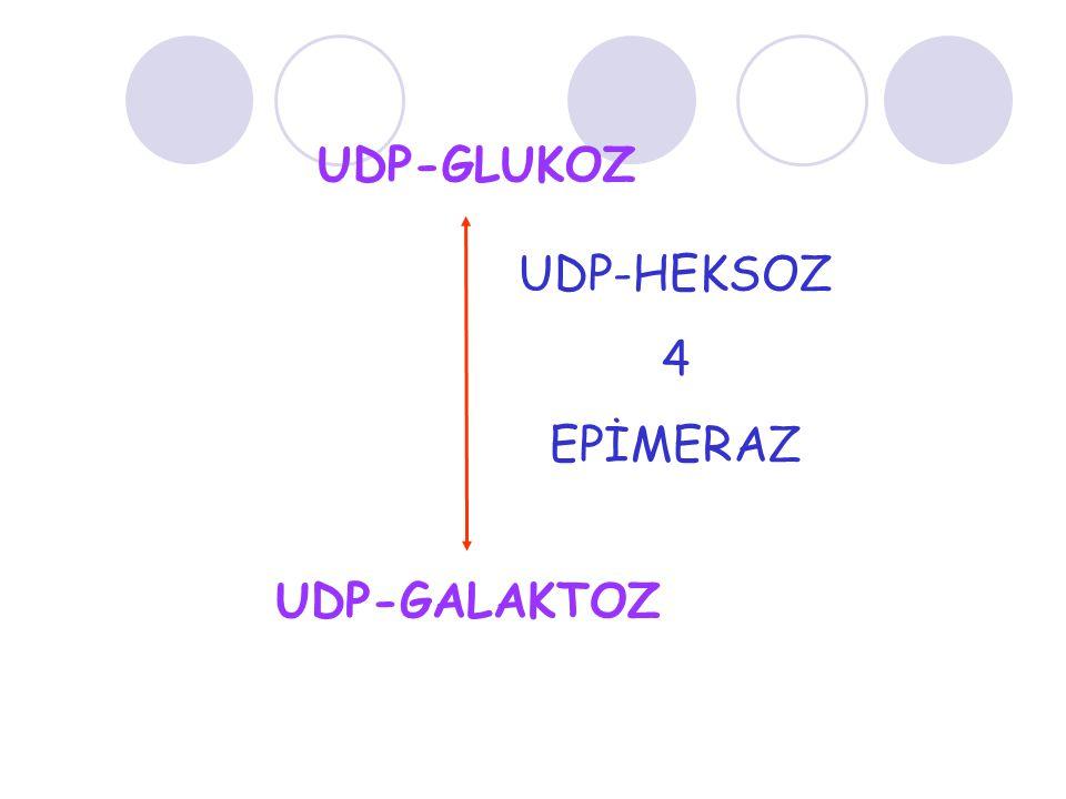 UDP-GLUKOZ UDP-GALAKTOZ UDP-HEKSOZ 4 EPİMERAZ