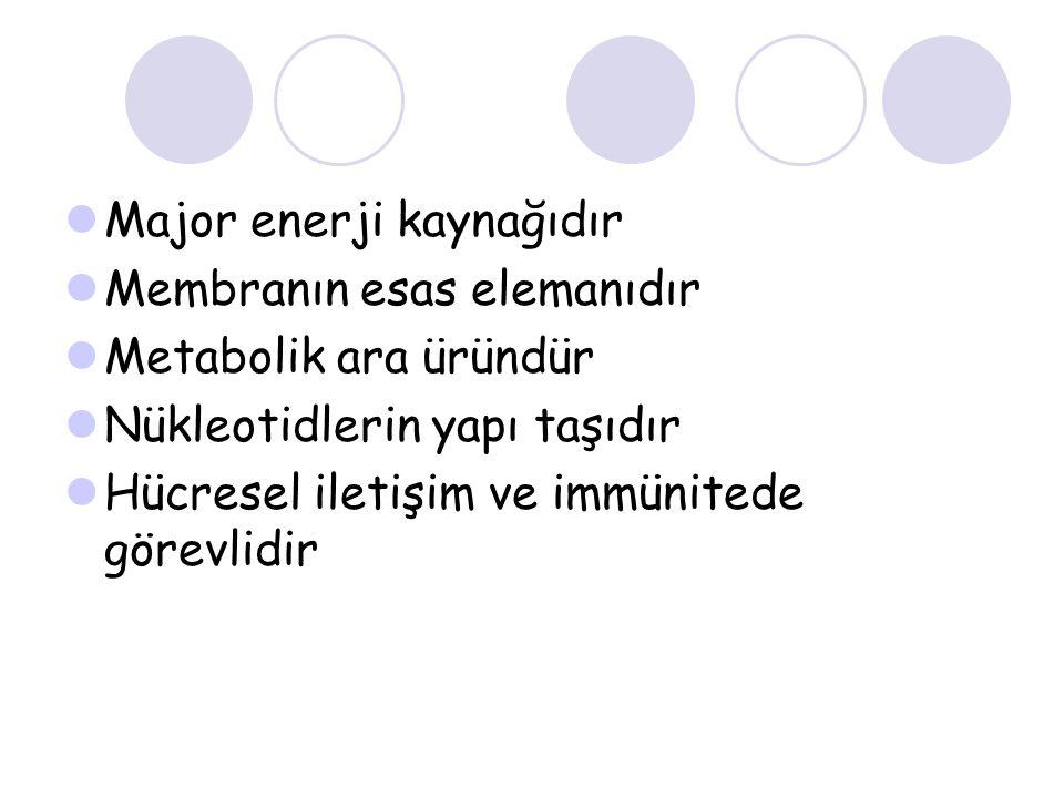 Major enerji kaynağıdır Membranın esas elemanıdır Metabolik ara üründür Nükleotidlerin yapı taşıdır Hücresel iletişim ve immünitede görevlidir