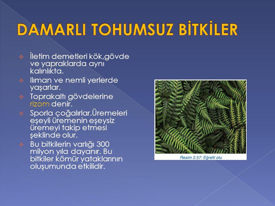  Bu tür bitkiler çiçek ve tohum oluşturur. Gerçek kök,gövde ve yapraklara sahiptir.