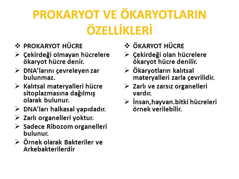 HÜCRE VE DOKU KÜLTÜRÜ  Hücre ve doku kültürü:  Bu konuyla ile ilgili çalışma 1800 lü yıllarda başlamış.Türkiye de 1970 li yıllarda başlanıştır.