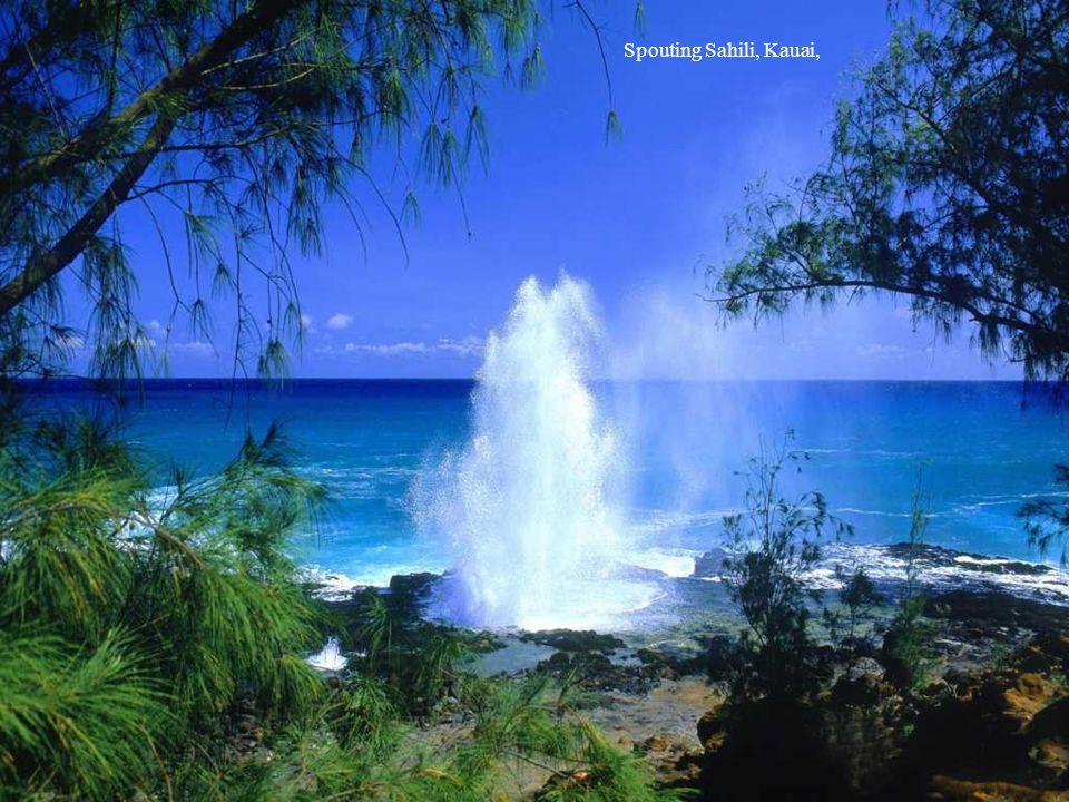 Spouting Sahili, Kauai,