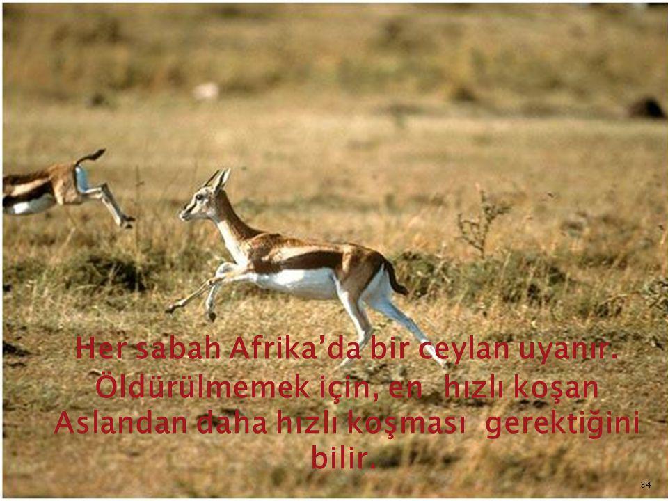Her sabah Afrika'da bir ceylan uyanır. Öldürülmemek için, en hızlı koşan Aslandan daha hızlı koşması gerektiğini bilir. 34