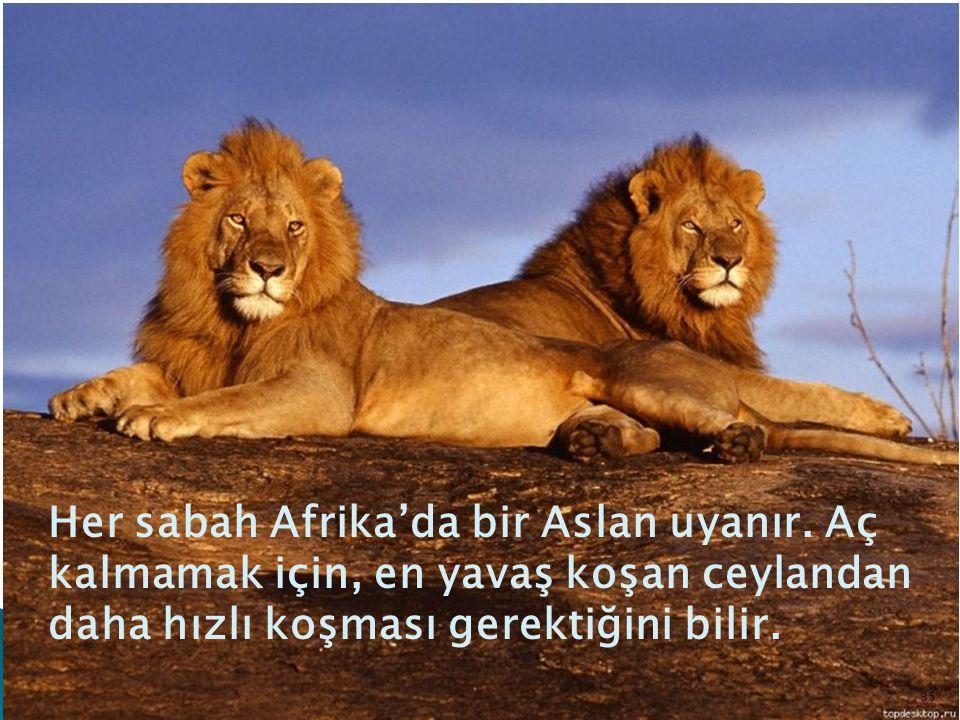 Her sabah Afrika'da bir Aslan uyanır. Aç kalmamak için, en yavaş koşan ceylandan daha hızlı koşması gerektiğini bilir. 35