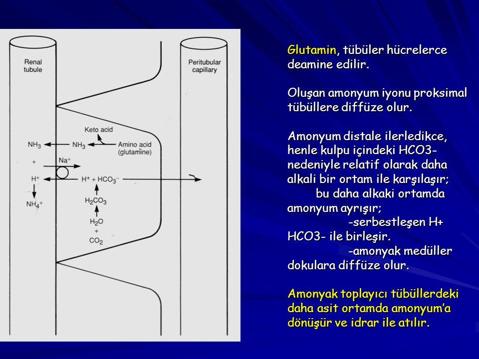 Glutamin, tübüler hücrelerce deamine edilir. Oluşan amonyum iyonu proksimal tübüllere diffüze olur. Amonyum distale ilerledikce, henle kulpu içindeki