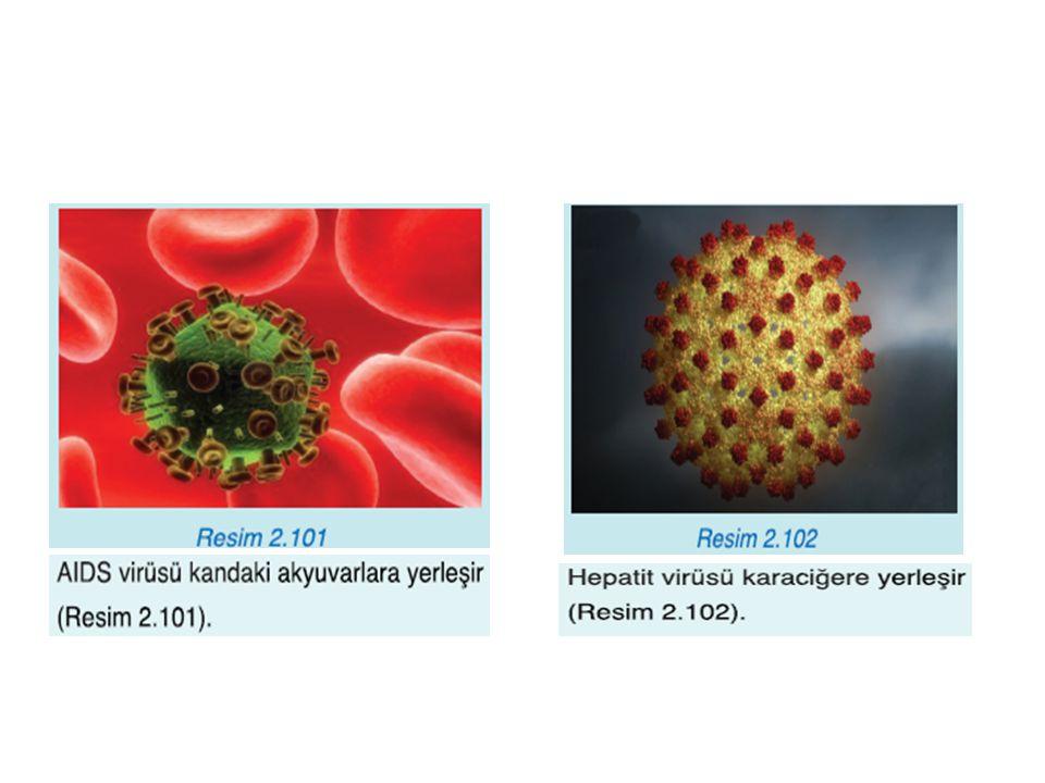 Grip Virüsü  Solunum yoluyla bulaşır.Etkili bir hastalıktır.