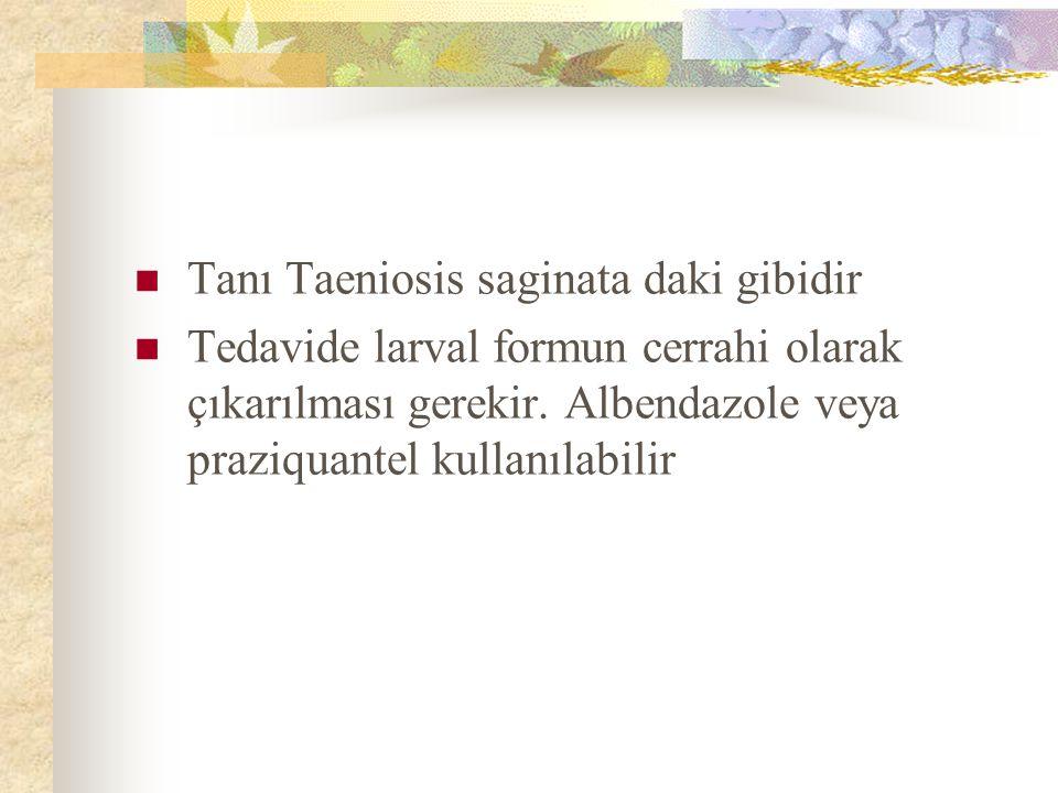 Tanı Taeniosis saginata daki gibidir Tedavide larval formun cerrahi olarak çıkarılması gerekir. Albendazole veya praziquantel kullanılabilir