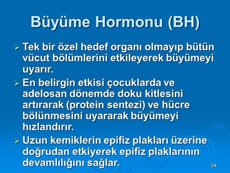 Büyüme Hormonu (BH)  Tek bir özel hedef organı olmayıp bütün vücut bölümlerini etkileyerek büyümeyi uyarır.  En belirgin etkisi çocuklarda ve adelos