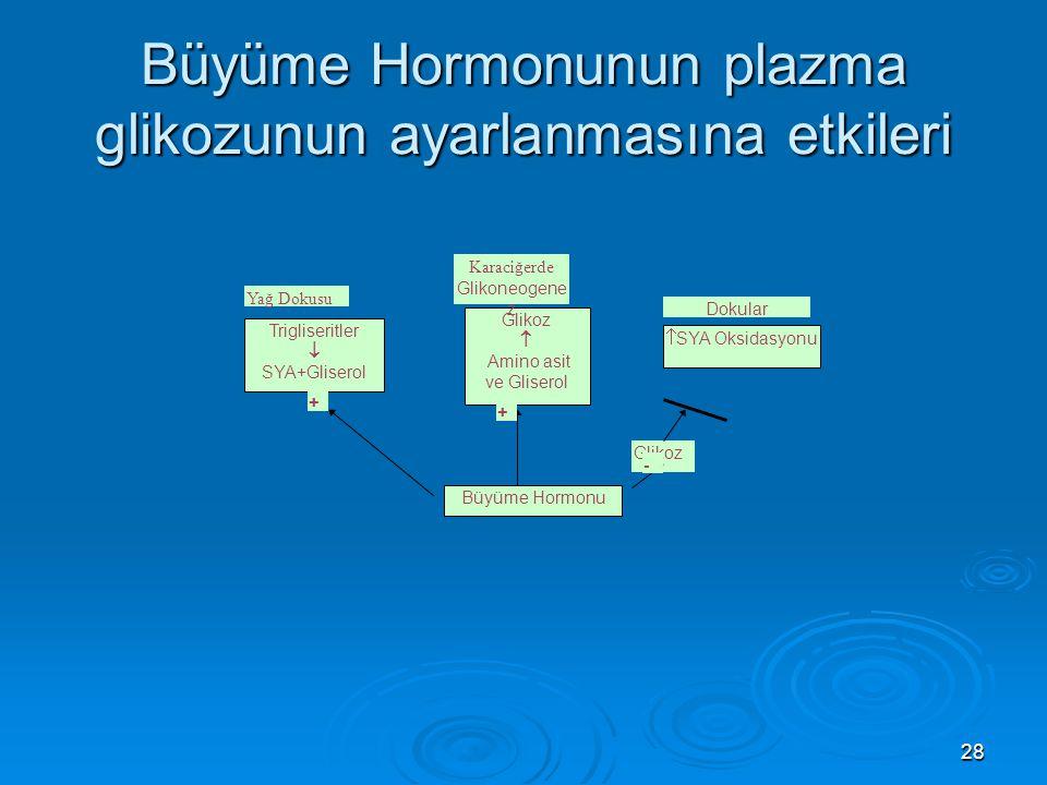 Büyüme Hormonunun plazma glikozunun ayarlanmasına etkileri Glikoz  Amino asit ve Gliserol Trigliseritler  SYA+Gliserol Yağ Dokusu Karaciğerde Glikon