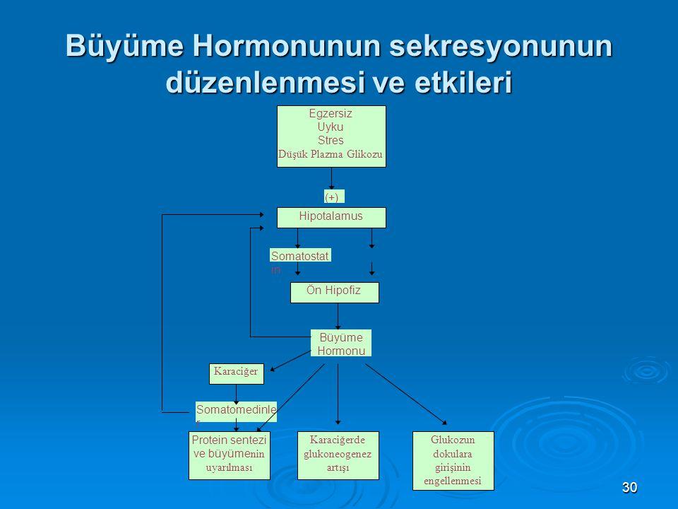 Büyüme Hormonunun sekresyonunun düzenlenmesi ve etkileri Egzersiz Uyku Stres Düşük Plazma Glikozu Hipotalamus Ön Hipofiz Karaciğer Protein sentezi ve