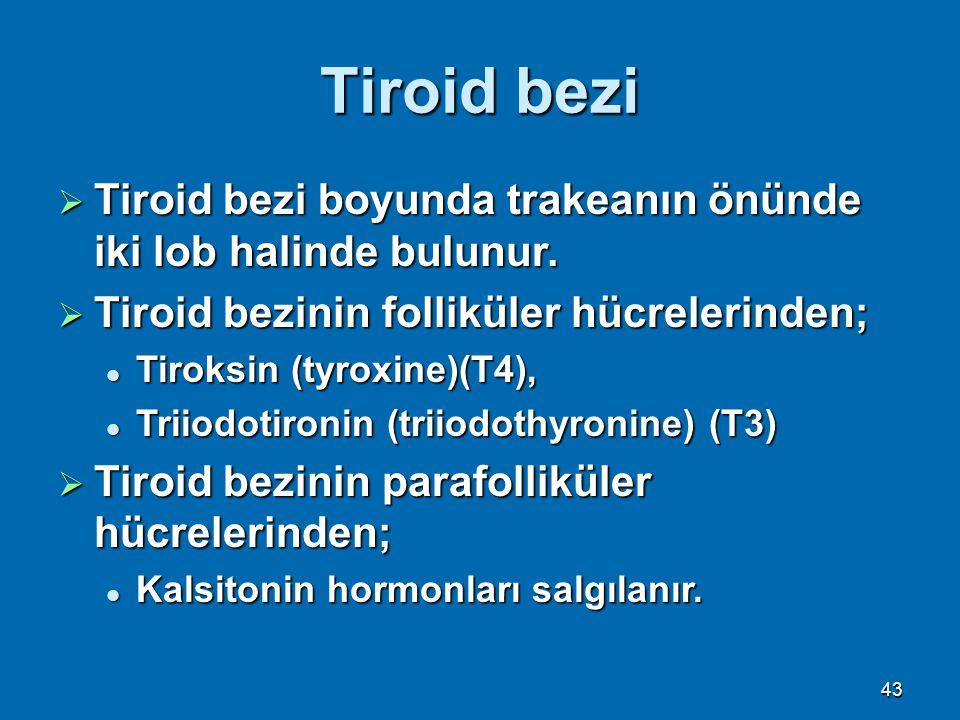 Tiroid bezi  Tiroid bezi boyunda trakeanın önünde iki lob halinde bulunur.  Tiroid bezinin folliküler hücrelerinden; Tiroksin (tyroxine)(T4), Tiroks