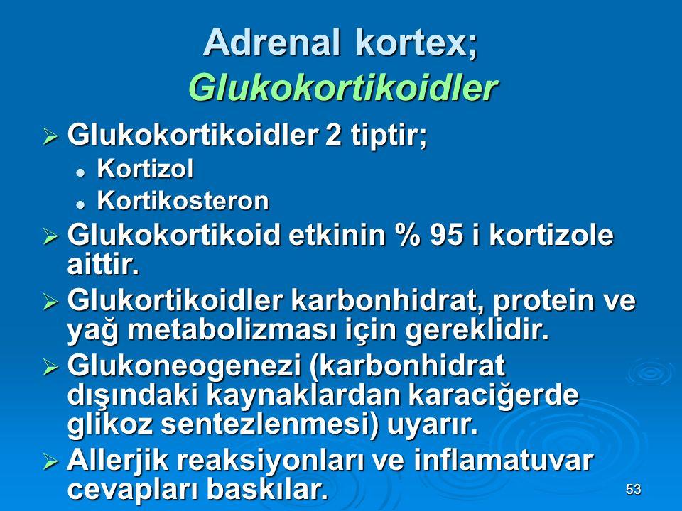  Glukokortikoidler 2 tiptir; Kortizol Kortizol Kortikosteron Kortikosteron  Glukokortikoid etkinin % 95 i kortizole aittir.  Glukortikoidler karbon