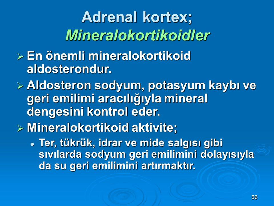  En önemli mineralokortikoid aldosterondur.  Aldosteron sodyum, potasyum kaybı ve geri emilimi aracılığıyla mineral dengesini kontrol eder.  Minera