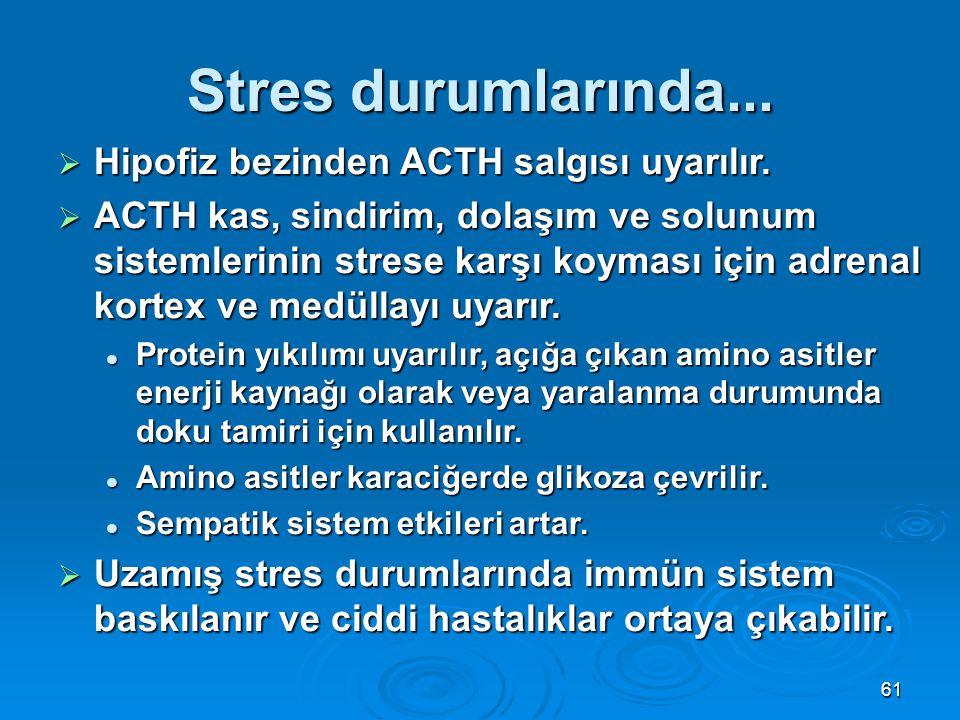 Stres durumlarında...  Hipofiz bezinden ACTH salgısı uyarılır.  ACTH kas, sindirim, dolaşım ve solunum sistemlerinin strese karşı koyması için adren