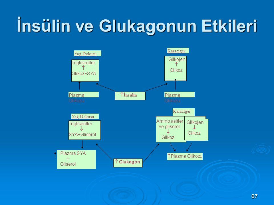 İnsülin ve Glukagonun Etkileri Trigliseritler  Glikoz+SYA Plazma Glikozu Yağ Dokusu Trigliseritler  SYA+Gliserol Plazma SYA + Gliserol  İnsülin  G