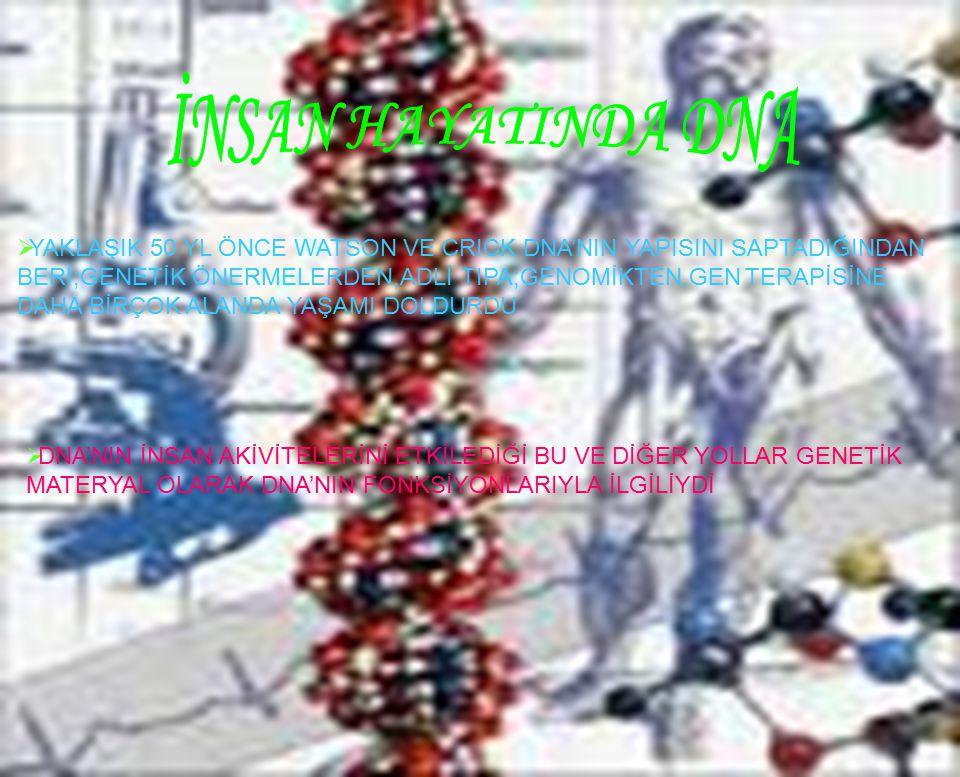 7  YAKLAŞIK 50 YL ÖNCE WATSON VE CRICK DNA'NIN YAPISINI SAPTADIĞINDAN BERİ;GENETİK ÖNERMELERDEN,ADLİ TIPA;GENOMİKTEN,GEN TERAPİSİNE DAHA BİRÇOK ALANDA YAŞAMI DOLDURDU  DNA'NIN İNSAN AKİVİTELERİNİ ETKİLEDİĞİ BU VE DİĞER YOLLAR GENETİK MATERYAL OLARAK DNA'NIN FONKSİYONLARIYLA İLGİLİYDİ