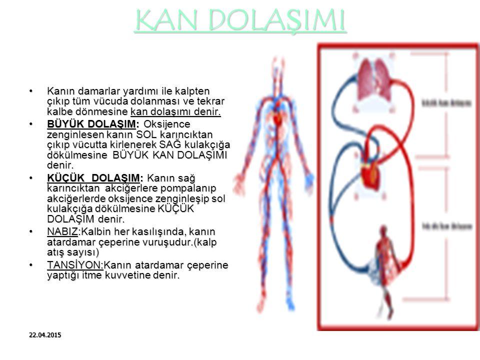 22.04.2015 KAN DOLAŞIMI Kanın damarlar yardımı ile kalpten çıkıp tüm vücuda dolanması ve tekrar kalbe dönmesine kan dolaşımı denir. BÜYÜK DOLAŞIM: Oks