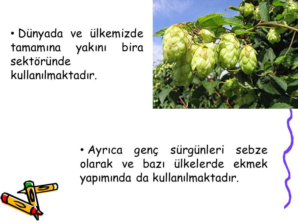 Dünyada ve ülkemizde tamamına yakını bira sektöründe kullanılmaktadır. Ayrıca genç sürgünleri sebze olarak ve bazı ülkelerde ekmek yapımında da kullan