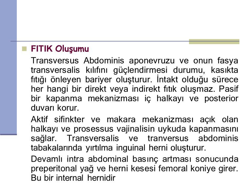 FITIK Oluşumu Transversus Abdominis aponevruzu ve onun fasya transversalis kılıfını güçlendirmesi durumu, kasıkta fıtığı önleyen bariyer oluşturur.
