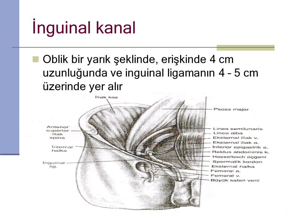 İnguinal kanal O blik bir yarık şeklinde, erişkinde 4 cm uzunluğunda ve inguinal ligamanın 4 – 5 cm üzerinde yer alır