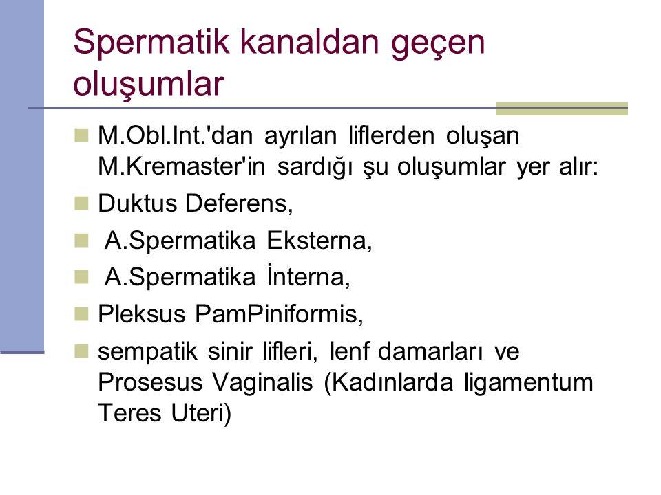Spermatik kanaldan geçen oluşumlar M.Obl.Int. dan ayrılan liflerden oluşan M.Kremaster in sardığı şu oluşumlar yer alır: Duktus Deferens, A.Spermatika Eksterna, A.Spermatika İnterna, Pleksus PamPiniformis, sempatik sinir lifleri, lenf damarları ve Prosesus Vaginalis (Kadınlarda ligamentum Teres Uteri)