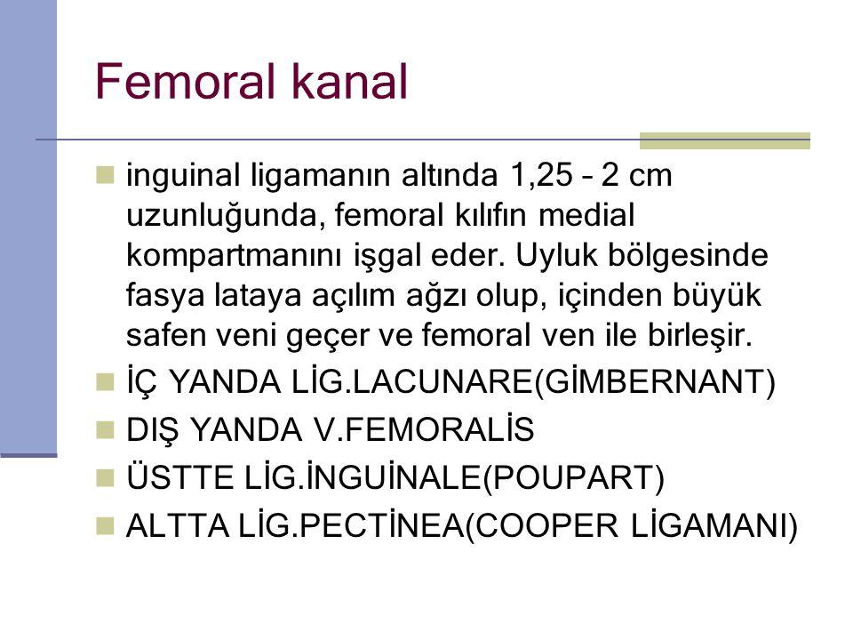 Femoral kanal inguinal ligamanın altında 1,25 – 2 cm uzunluğunda, femoral kılıfın medial kompartmanını işgal eder.