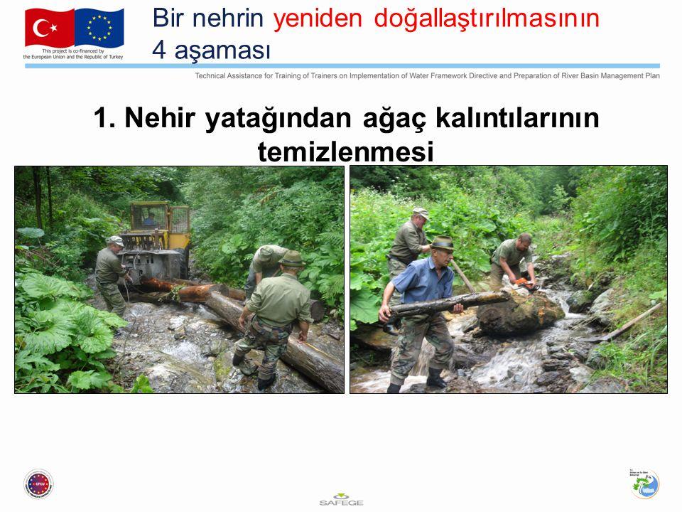 Bir nehrin yeniden doğallaştırılmasının 4 aşaması 1. Nehir yatağından ağaç kalıntılarının temizlenmesi