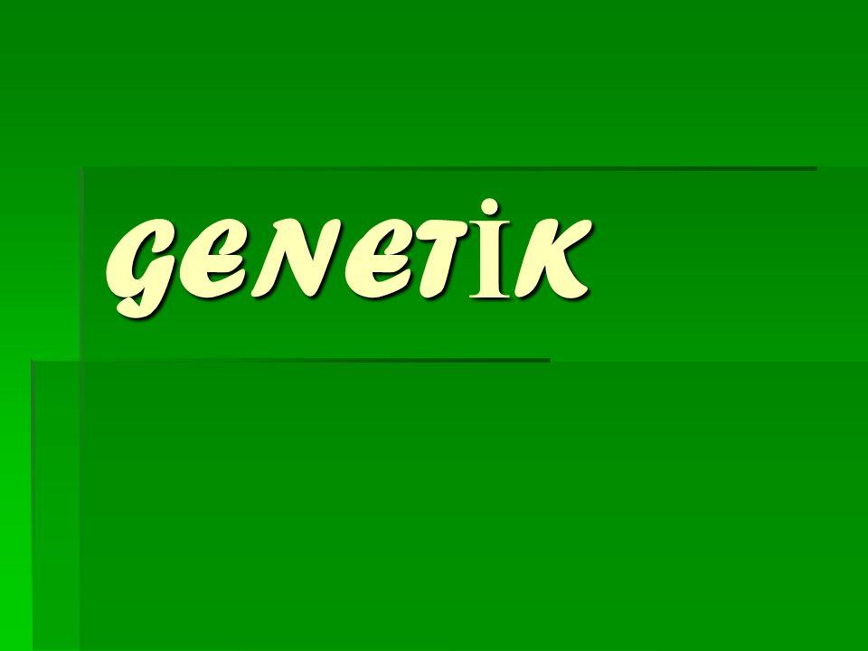 GENET İ K
