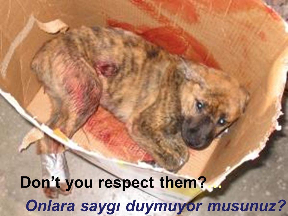 Don't you respect them?… Onlara saygı duymuyor musunuz?