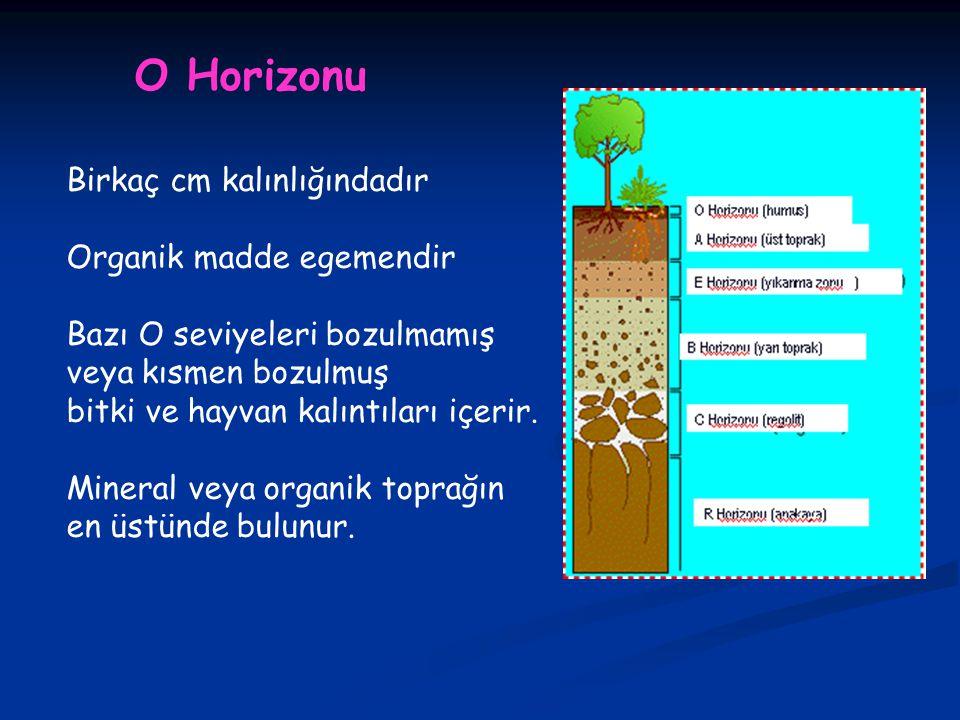 O Horizonu Birkaç cm kalınlığındadır Organik madde egemendir Bazı O seviyeleri bozulmamış veya kısmen bozulmuş bitki ve hayvan kalıntıları içerir.