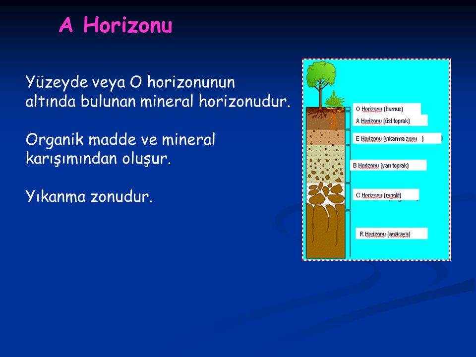 A Horizonu Yüzeyde veya O horizonunun altında bulunan mineral horizonudur.