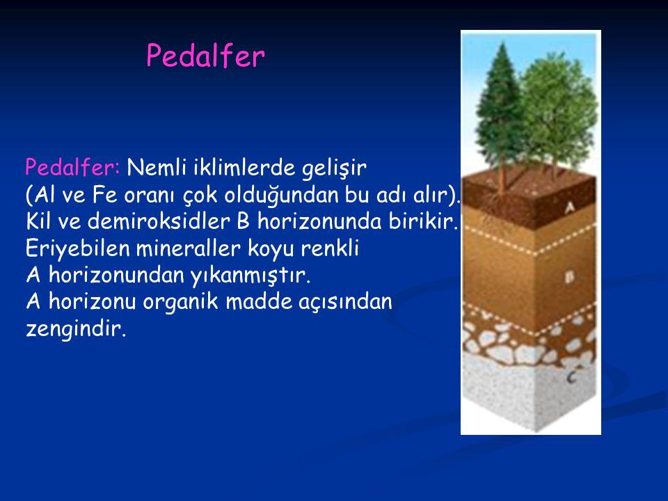 Pedalfer: Nemli iklimlerde gelişir (Al ve Fe oranı çok olduğundan bu adı alır).