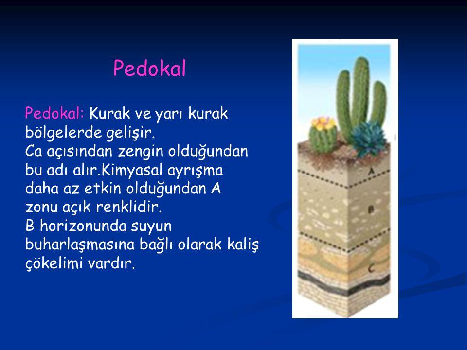 Pedokal: Kurak ve yarı kurak bölgelerde gelişir.