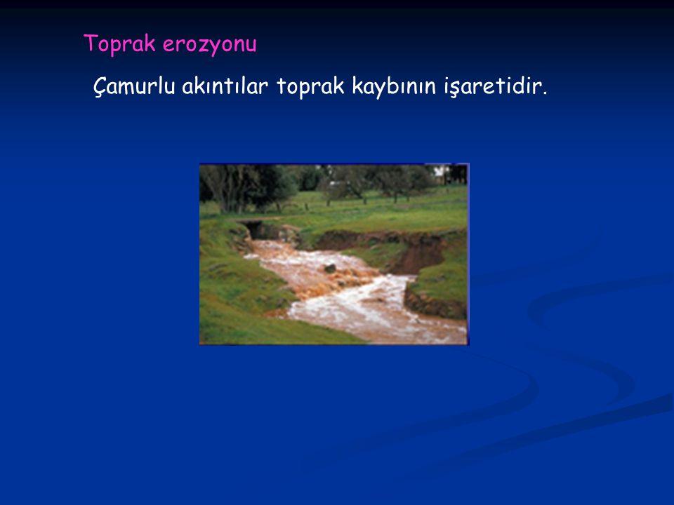 Toprak erozyonu Çamurlu akıntılar toprak kaybının işaretidir.
