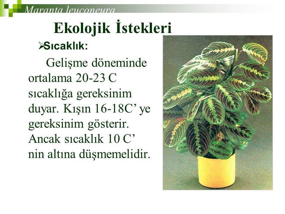 Ekolojik İstekleri Gelişme döneminde ortalama 20-23 C sıcaklığa gereksinim duyar.