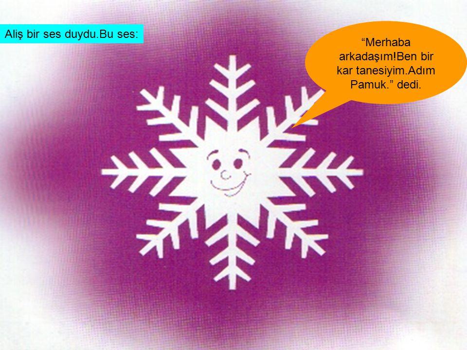 """Aliş bir ses duydu.Bu ses: """"Merhaba arkadaşım!Ben bir kar tanesiyim.Adım Pamuk."""" dedi."""