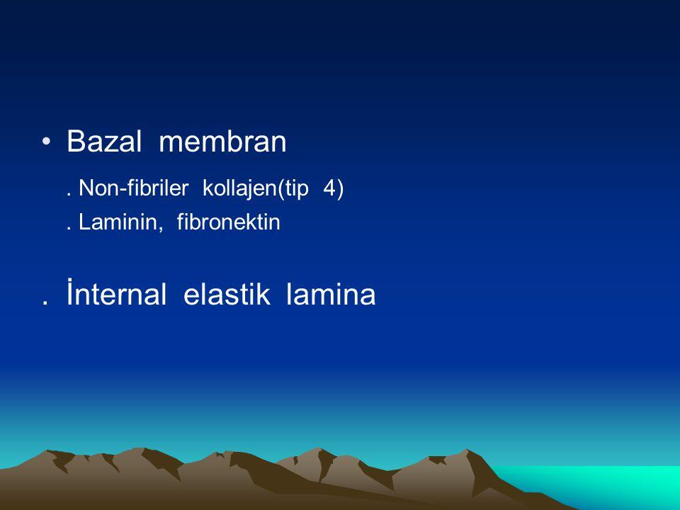 Bazal membran. Non-fibriler kollajen(tip 4). Laminin, fibronektin. İnternal elastik lamina