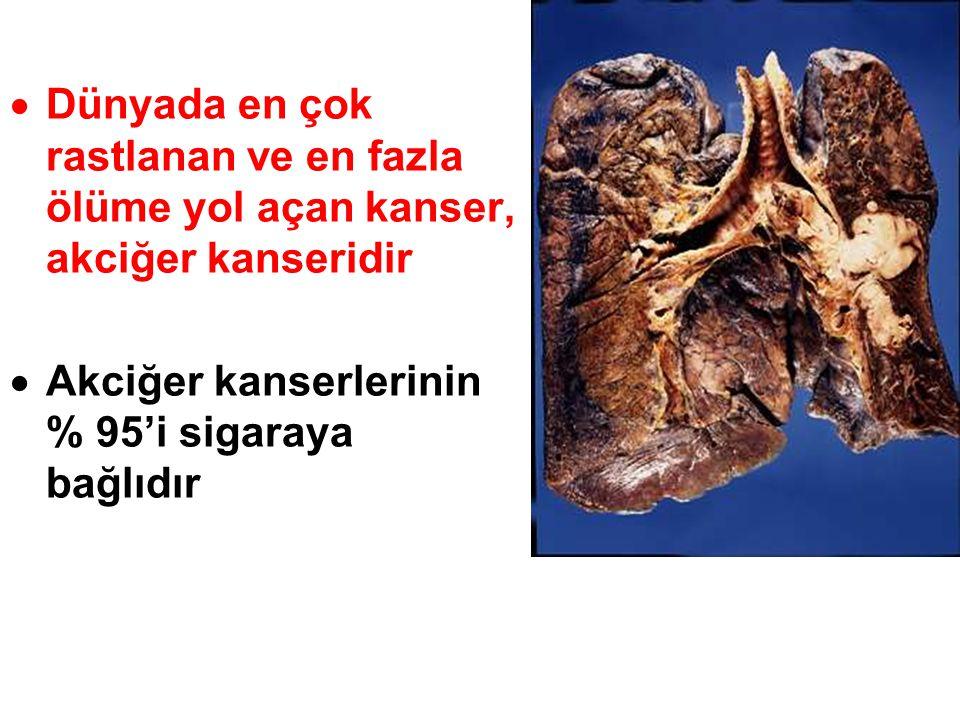  Dünyada en çok rastlanan ve en fazla ölüme yol açan kanser, akciğer kanseridir  Akciğer kanserlerinin % 95'i sigaraya bağlıdır
