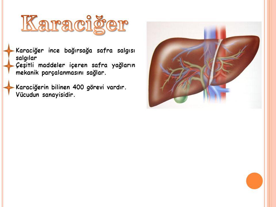 Karaciğer ince bağırsağa safra salgısı salgılar Çeşitli maddeler içeren safra yağların mekanik parçalanmasını sağlar. Karaciğerin bilinen 400 görevi v