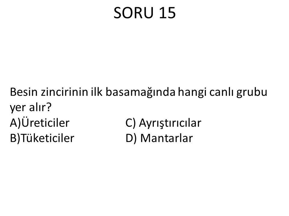 SORU 15 Besin zincirinin ilk basamağında hangi canlı grubu yer alır.